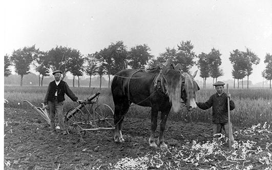 Travaux des champs vers 1930